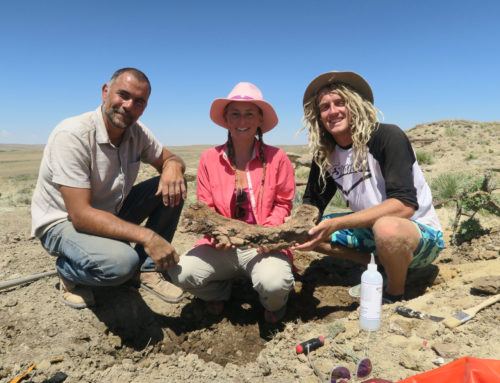 Uncovering a 65 million year old dinosaur
